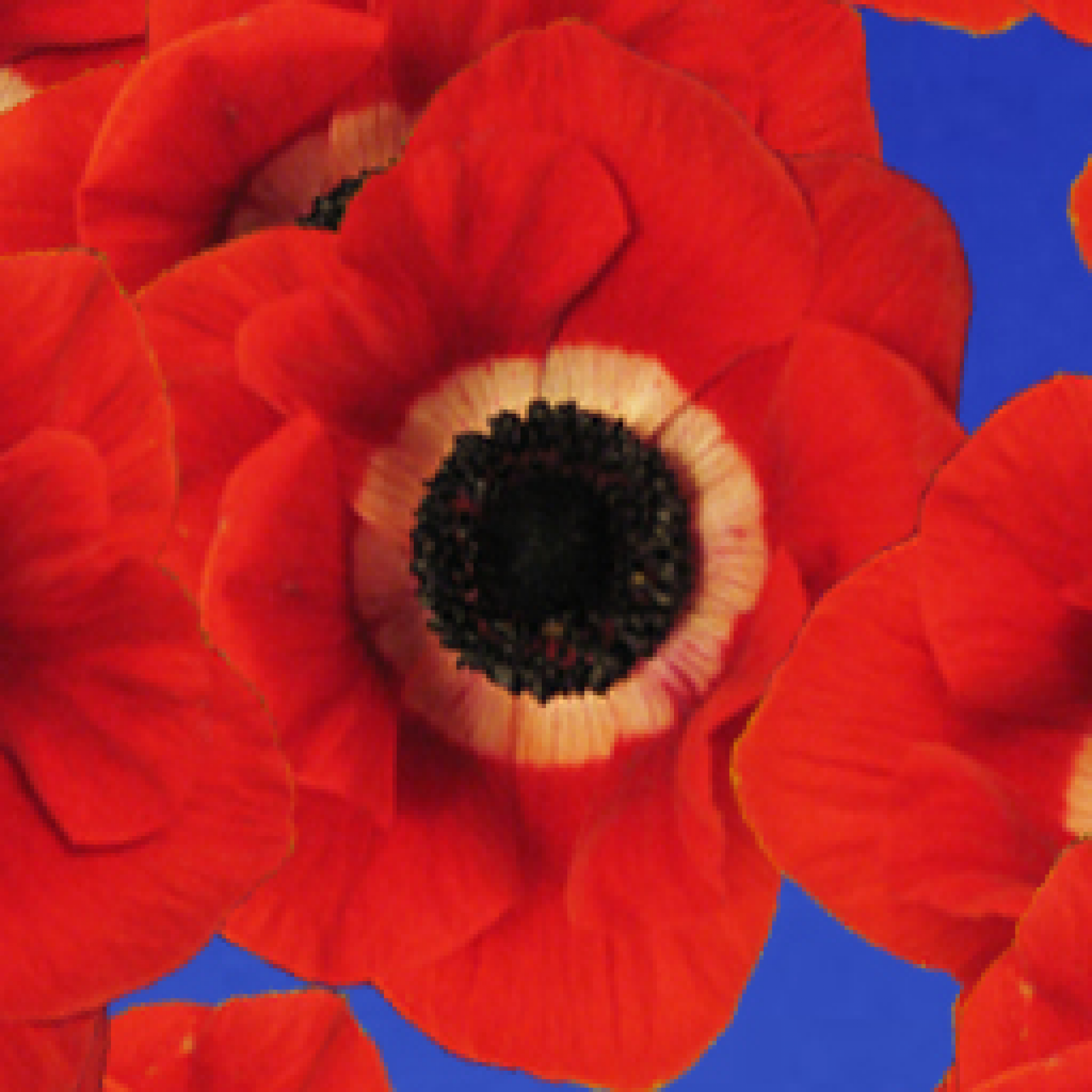 poppies-kids-adults-relaxation-sensory-main-location1