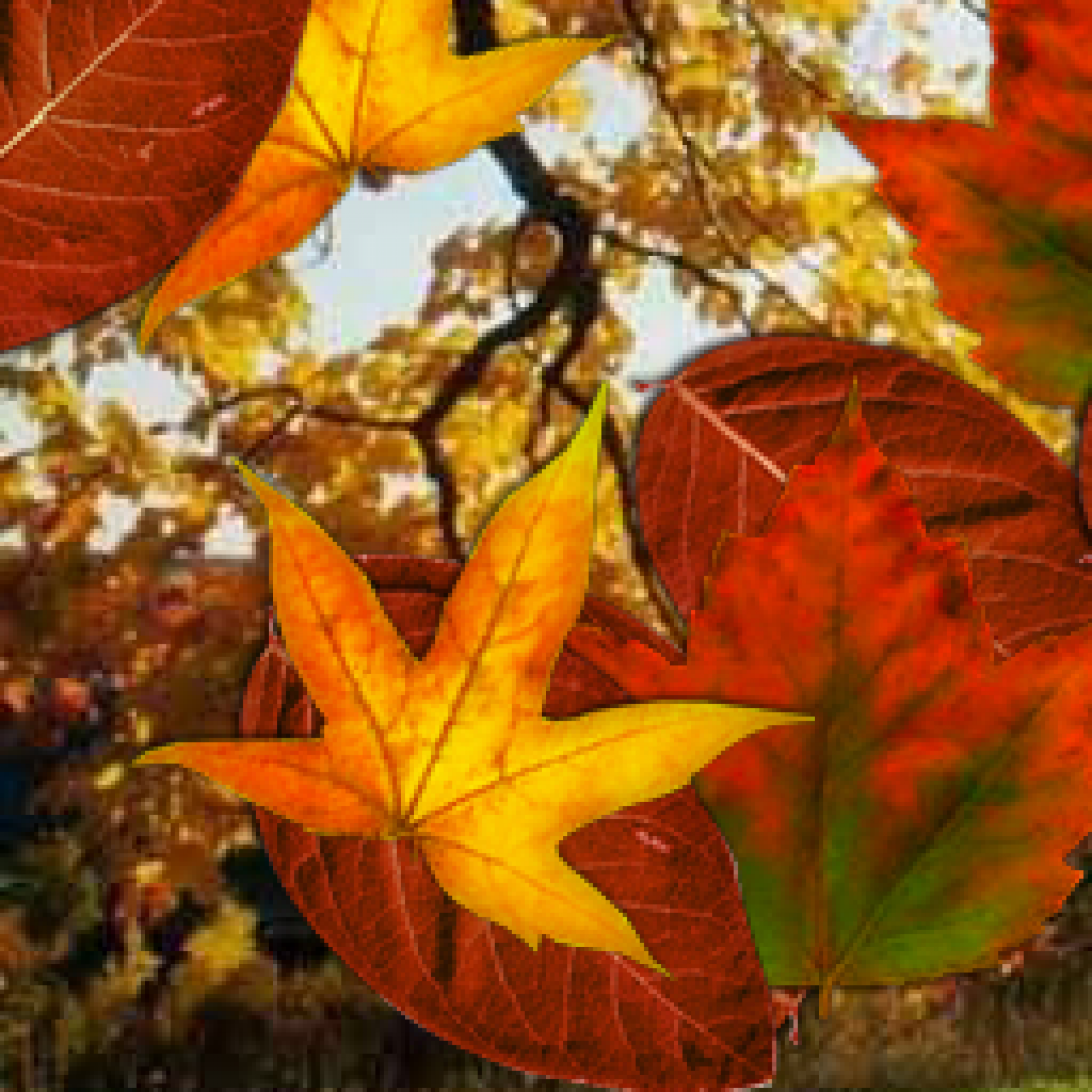 leaves-kids-adults-relaxation-sensory-main-location1