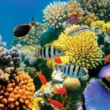 coral-water-travel-kids-adults-relaxation-transport-sensory-main-location1