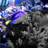 aquarium-kids-adults-relaxation-science-tech-sensory-main-location1