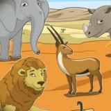 safari-kids-main-location1