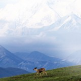 mount-mckinley-travel-adults-main-location1