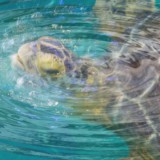turtle-travel-kids-adults-relaxation-surreal-science-tech-sensory-main-location1