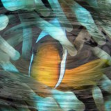 clownfish-kids-adults-relaxation-surreal-science-tech-sensory-main-location1