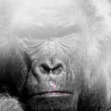 gorilla-mist-travel-kids-science-tech-education-main-location